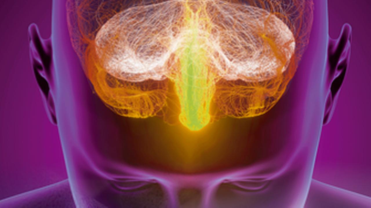 Une corrélation existe entre le microbiote intestinal et l'apparition de la maladie d'Alzheimer. Img avec CP Unige [Unige]
