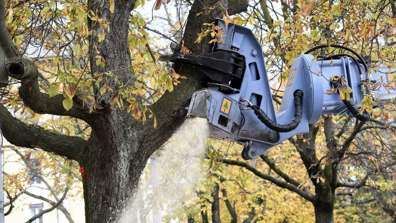 Genève: le canton ne compense pas assez les arbres qu'il fait abattre [Martial Trezzini - Keystone]