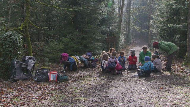 La forêt pour école [RTS]