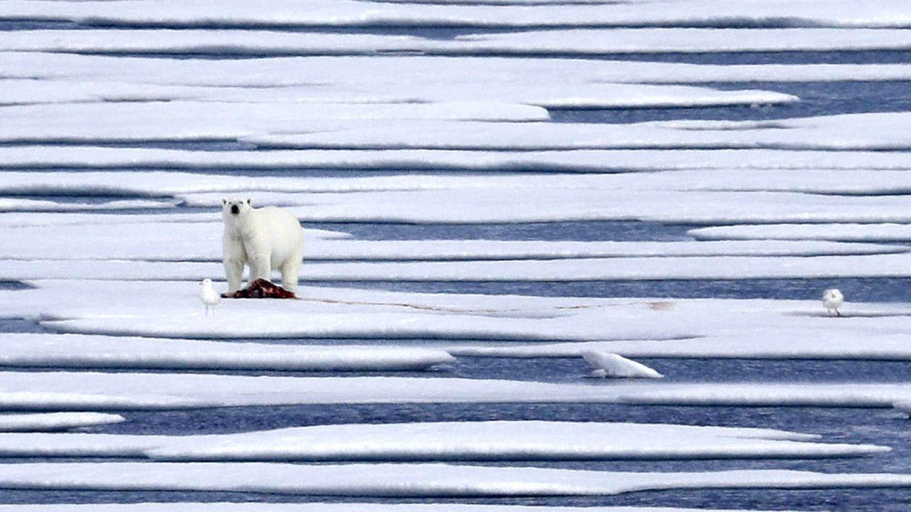 L'année 2020 sera probablement parmi les trois plus chaudes [David Goldman - AP]