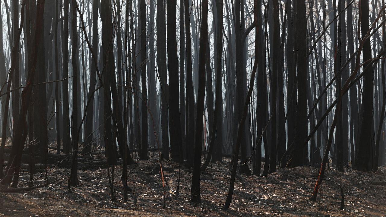 Dans l'Etat de Victoria, après les incendies. Australie, le 25 janvier 2020. [David Crosling - Keystone/epa]