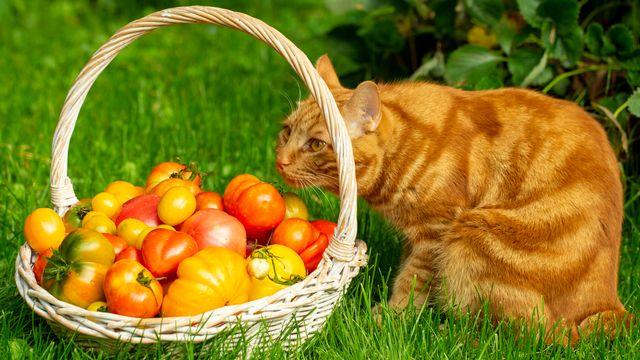 Et si les chats mangeaient végane? [NadyGinzburg - Depositphotos]