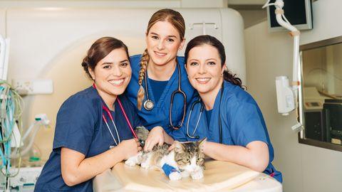 Les nouveaux vétérinaires