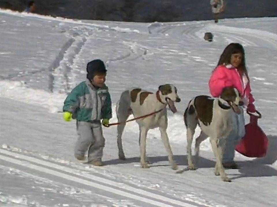 Nendaz, une belle vie de chiens! [RTS]