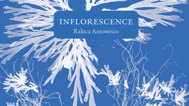 "Couverture de ""Inflorescence"" de Raluca Antonescu. [Editions La Baconnière]"
