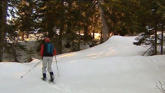 La randonnée en raquettes ne doit pas déranger la faune. [RTS]