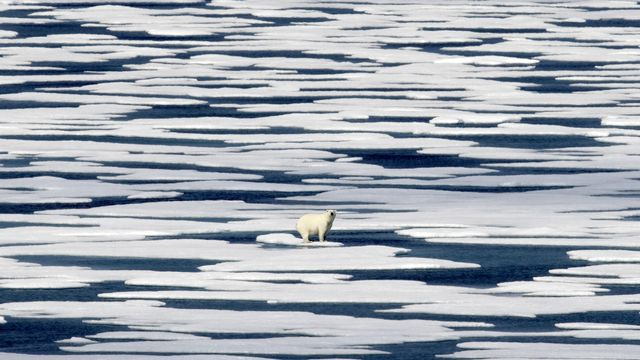 Un ours blanc perdu sur une banquise arctique en déliquescence dans le détroit de Franklin (Canada). [David Goldman - Keystone]
