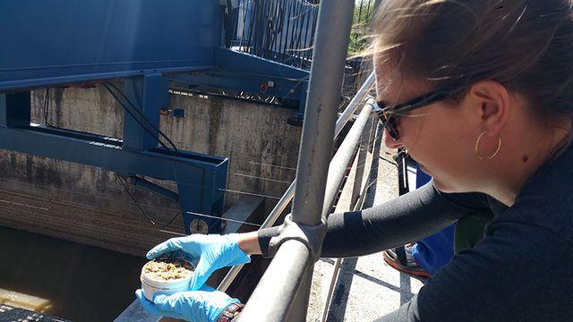 L'étudiante en master Lara Cayo prélève des échantillons de boue à la station de Werdhölzli.  Img avec CP Eawag Elke Suess Eawag [Elke Suess - Eawag]