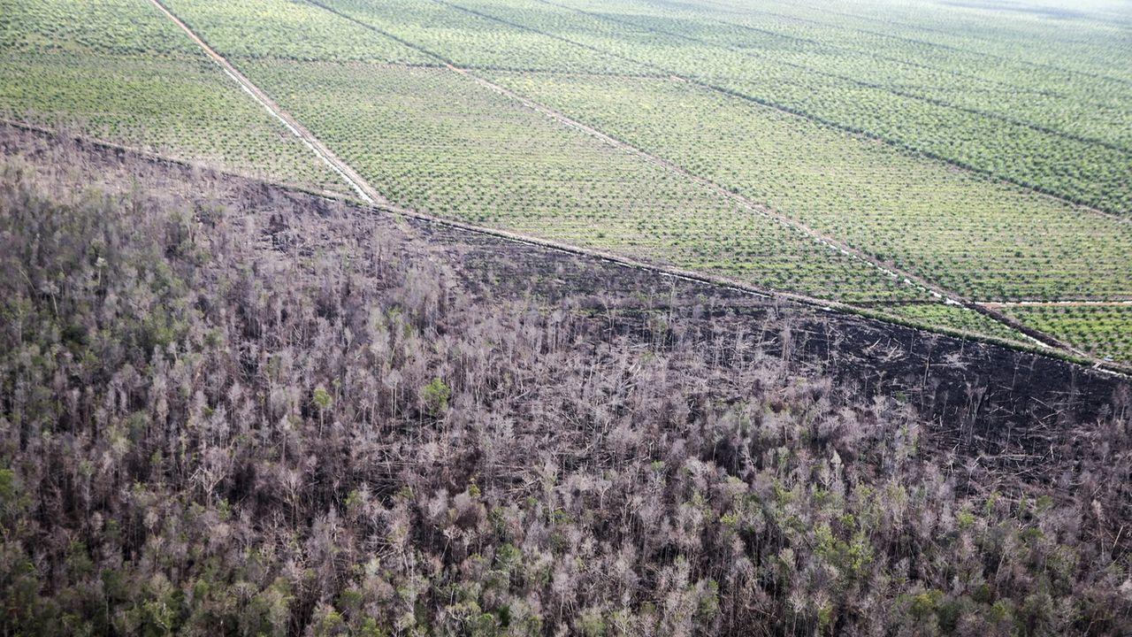Une vue aérienne d'une plantation de palme en Indonésie, installée après déforestation avec la technique de l'incendie volontaire. [Bagus Indahono - EPA/Keystone]