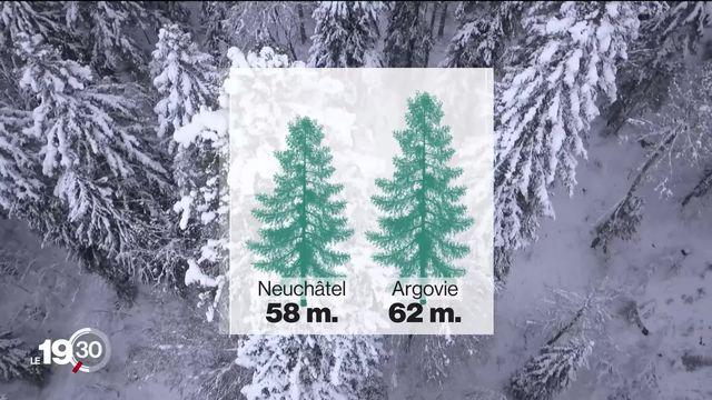 La guerre du sapin le plus haut de Suisse. Le record serait alémanique et non pas neuchâtelois. [RTS]
