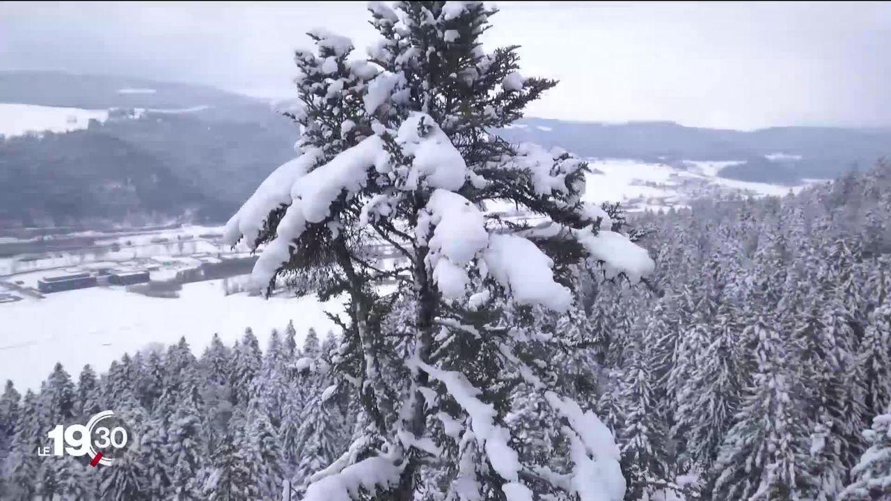 Un sapin neuchâtelois élu arbre le plus grand de Suisse [RTS]