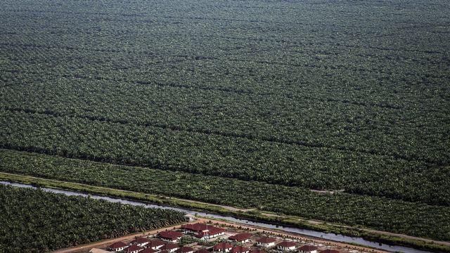 Des plantations de palmiers à huile au Kalimantan, en Indonésie. [EPA/Bagus Indahono - Keystone]