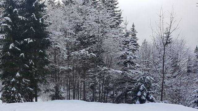 Du bois dʹici: la forêt: un réservoir à énergie. [DR]