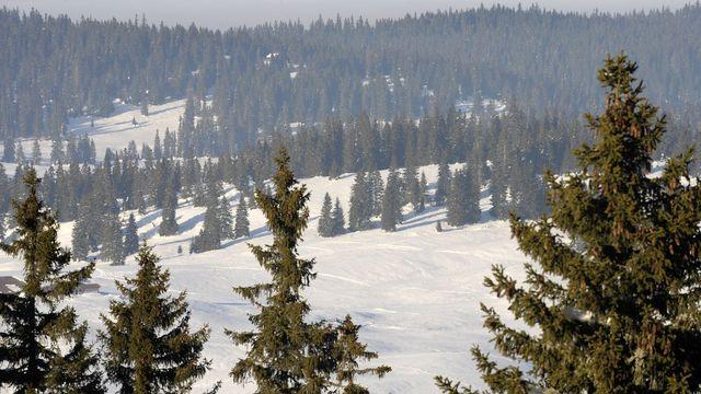 Forêt recouverte de neige dans la Vallée de Joux. [Laurent Gilliéron - Keystone]