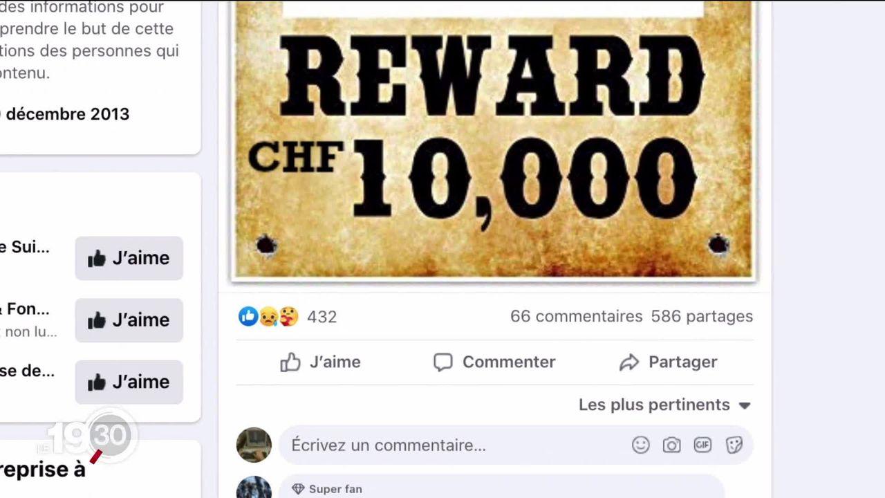 En Valais, une récompense est promise à celui qui trouvera le braconnier du louveteau de Torgon. [RTS]