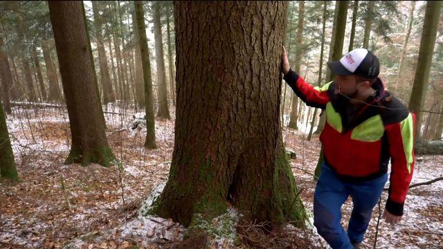 Le bois suisse [RTS]