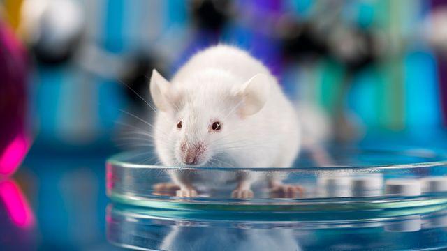 L'expérimentation animale soulève de nombreuses questions éthiques. JacobSt Depositphotos [JacobSt - Depositphotos]