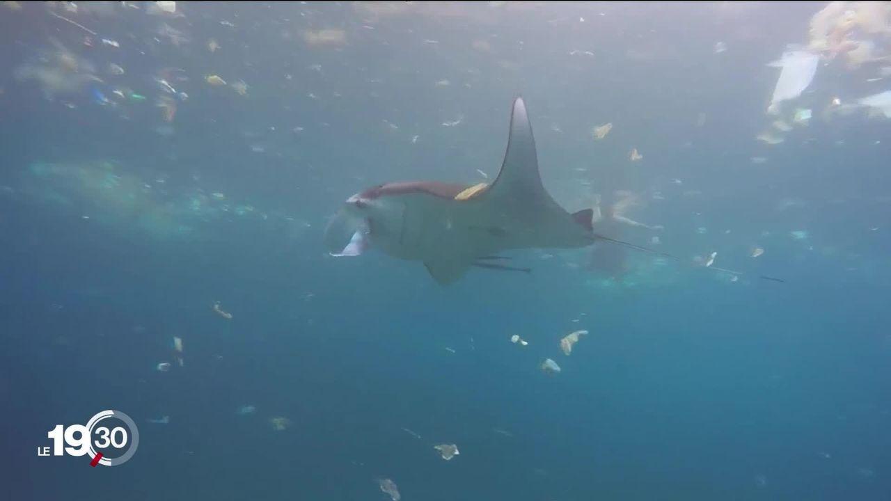 Des bateaux pour aspirer et recycler les millions de tonnes de plastique, qui souillent nos océans. [RTS]