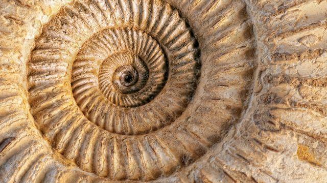 Analyser l'ADN de fossiles. [Klanneke - Depositphotos]
