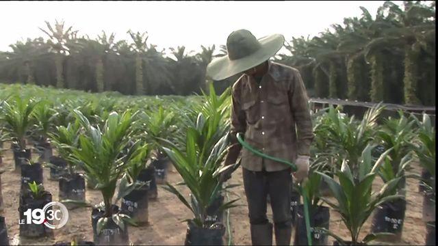 Le 7 mars prochain, la Suisse votera sur l'accord de libre-échange avec l'Indonésie, et sur l'importation de l'huile de palme. [RTS]