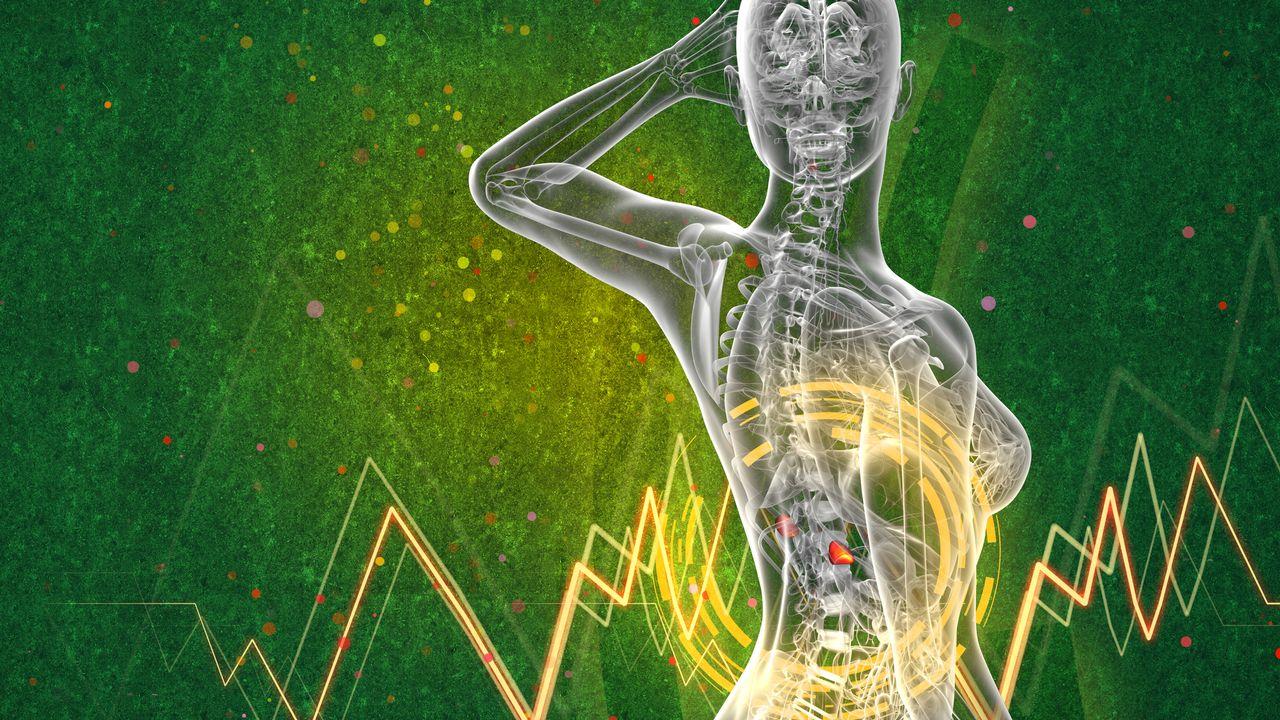 L'hormone du stress, le cortisol, est produite par les glandes surrénales. maya2008 Depositphotos [maya2008 - Depositphotos]