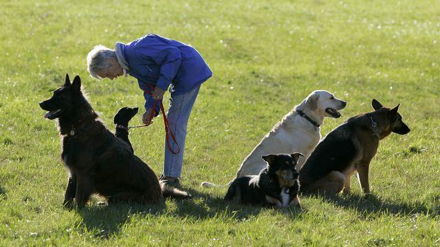Les cours pour nouveaux et nouvelles propriétaires de chiens sont à nouveau obligatoires dans le canton de Neuchâtel depuis janvier 2021. [Olivier Maire - Keystone]