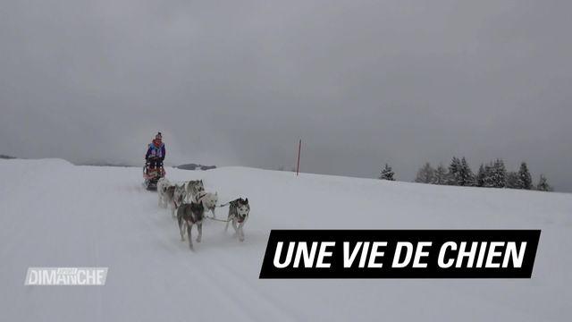 Le Mag: Une vie de chien [RTS]