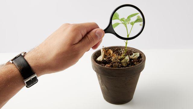 Des chercheurs sont parvenus à mieux comprendre la couleur verte des plantes. AntonMatyukha Depositphotos [AntonMatyukha - Depositphotos]