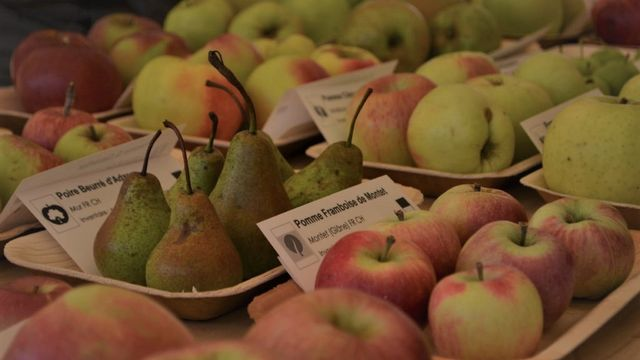 Fruits et biodiversité: vers une réhabilitation des pommes de nos régions?  [Rétropomme]
