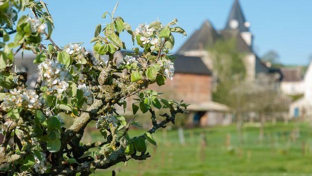 Fruits et biodiversité: sʹoccuper des arbres fruitiers à côté de chez soi, ça sʹapprend! [jura.ch]