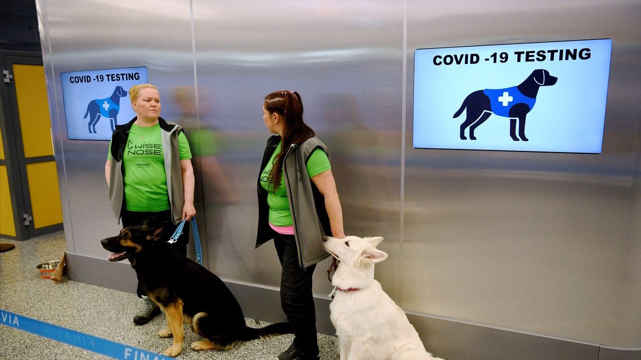 Les brigades de chiens renifleurs sont déjà déployées à l'arrivée de l'aéroport d'Helsinki pour détecter le Covid-19.  [ANTTI AIMO-KOIVISTO - AFP]