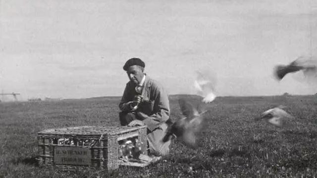 Les pigeons voyageurs de monsieur Schenker, colombophile fribourgeois. [RTS]