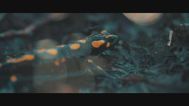 Super Bio Hero : La salamandre tachetée [RTS]
