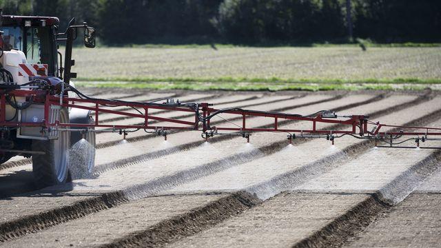 Un agriculture répand un herbicide sur des planches de semis d'épinards, le 17 septembre 2019 à Birmenstorf (AG). [Christian Beutler - Keystone]