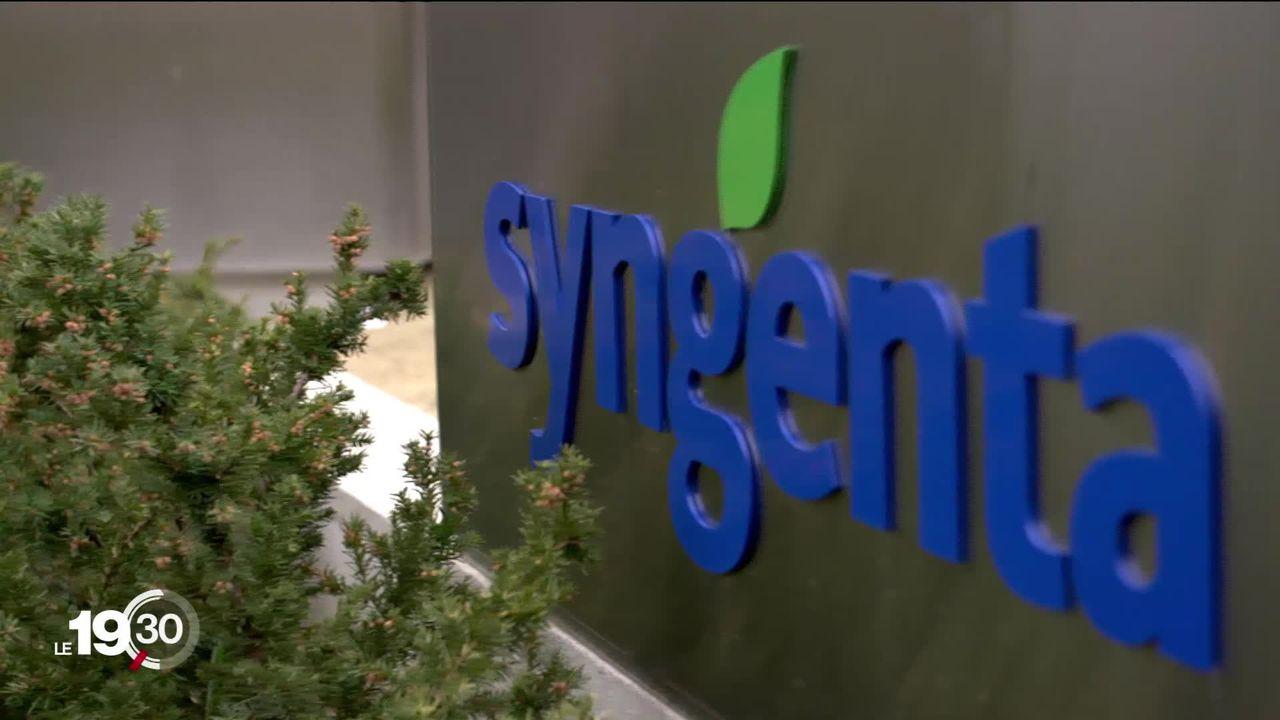 Un ex-employé de Syngenta lance de graves accusations contre l'entreprise à propos d'un herbicide mortel. [RTS]