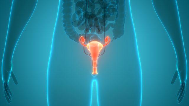 Système reproducteur féminin avec système nerveux et anatomie de la vessie. 3D. [magicmine - depositphotos]