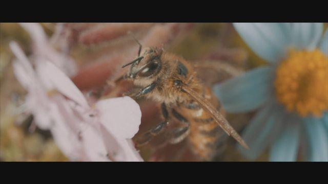 Super Bio Hero : L'abeille [RTS]