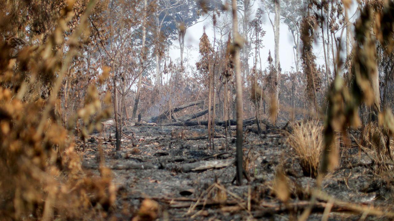 Zone dévastée par le feu dans l'Etat brésilien d'Amazonas, en août 2020. [Ueslei Marcelino - Reuters]