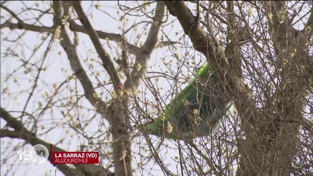 Réfugiés dans un arbre, deux protestataires de la ZAD du Mormont refusent toujours de partir. Reportage [RTS]