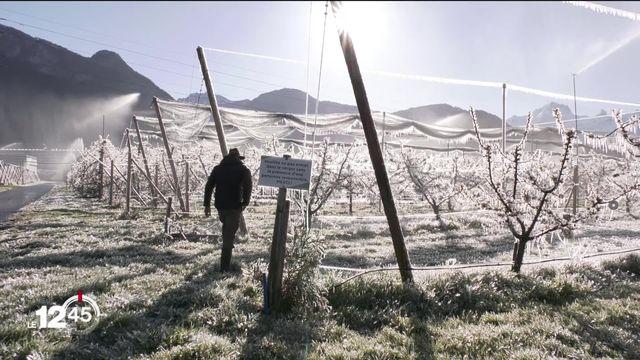Le gel provoque l'inquiétude chez les arboriculteurs. [RTS]