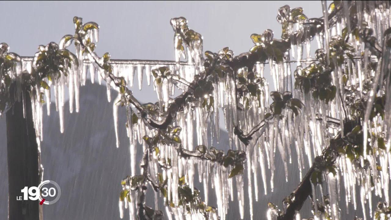 La vague de froid provoque l'inquiétude chez les arboriculteurs. [RTS]