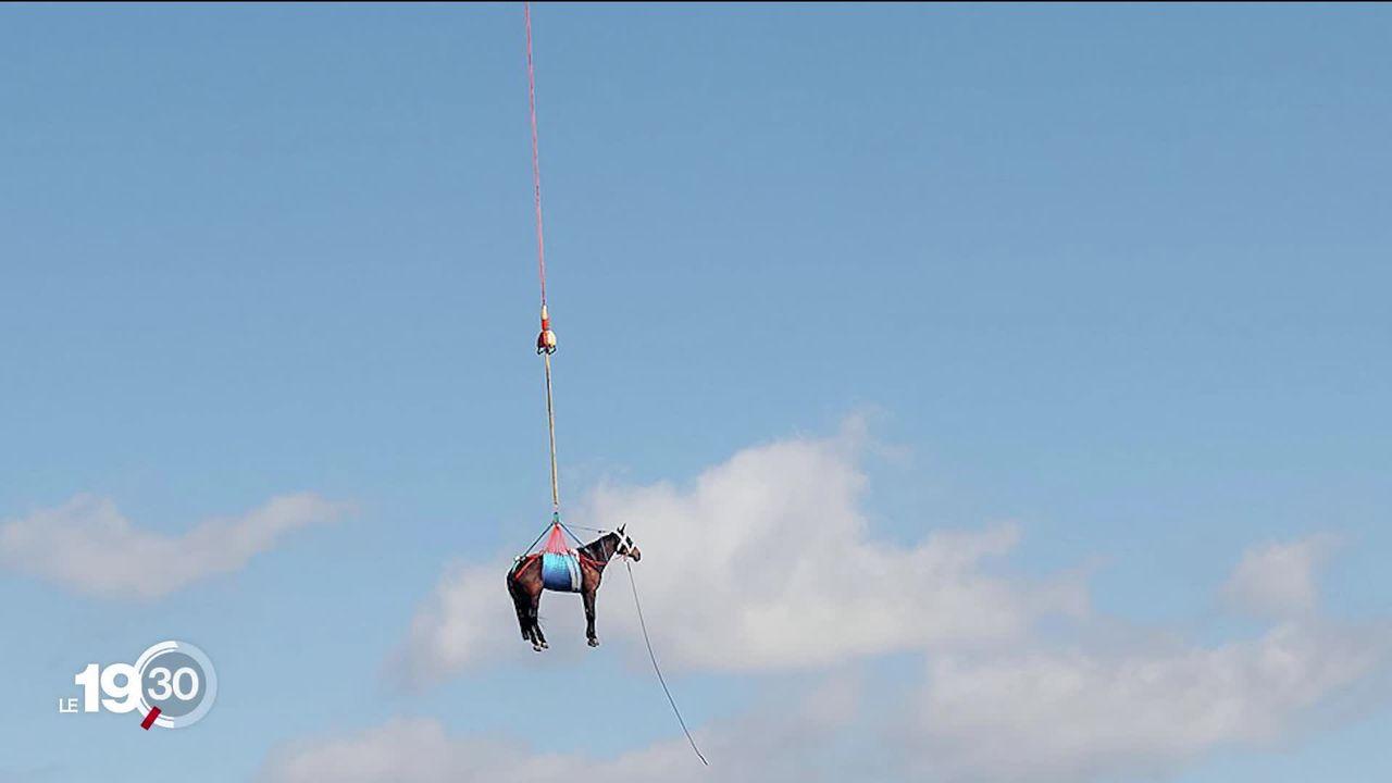 Armée suisse: des chevaux ailés à Saignelégier pour un exercice héliporté [RTS]