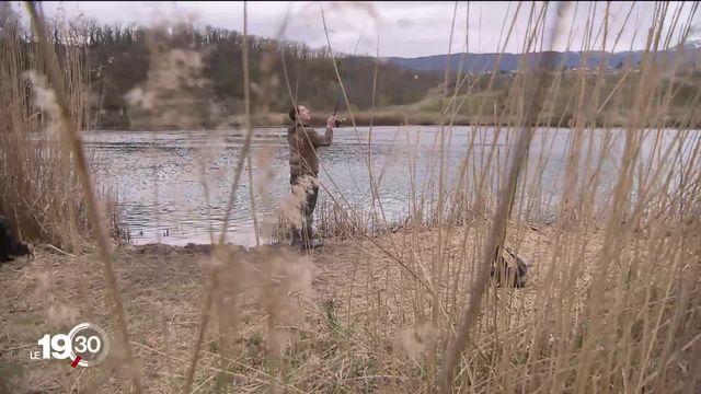 Le nombre de poissons dans le Rhône genevois diminue. Les barrages hydroélectriques sont mis en cause. [RTS]