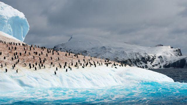 L'augmentation des pluies sur l'Antarctique menace les colonies de manchots. mzphoto Depositphotos [mzphoto - Depositphotos]