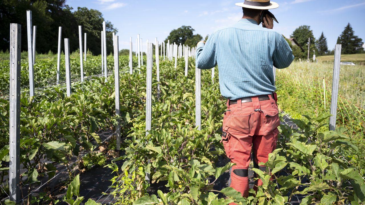 Les petits paysans soutiennent l'initiative contre les pesticides. [Leandre Duggan - KEYSTONE]