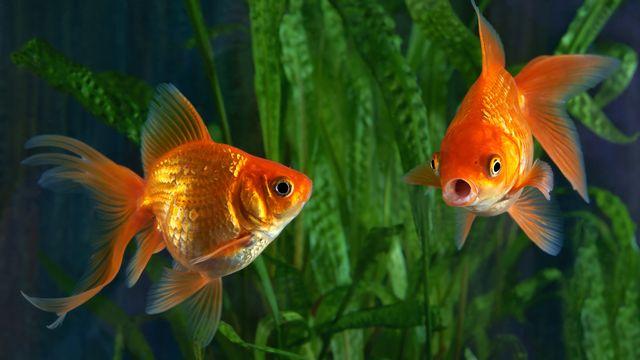 Les poissons n'ont pas tous la même peau. MirekKijewski  Depositphotos [MirekKijewski  - Depositphotos]