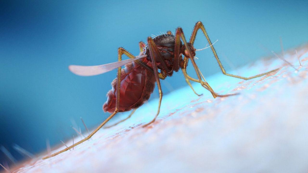 Image d'illustration d'un moustique sur une peau humaine. [Sebastian Kaulitzki / Science photo Library - AFP]