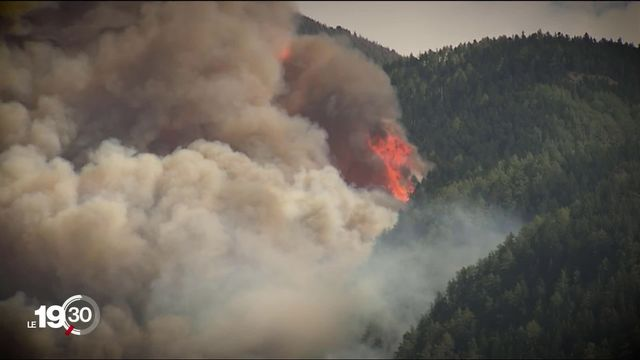 Dix ans après l'incendie, la forêt protectrice de Viège pousse lentement mais sûrement. [RTS]
