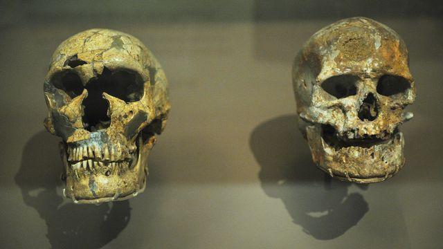 Des gènes de la créativité ont donné à Homo sapiens un avantage [Mandel Ngan - AFP]