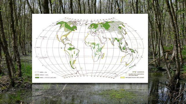 Répartition mondiales des tourbières [IPS/International Petland Society]